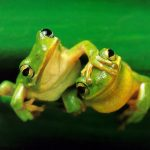 These 7 World's Cutest Frogs Will Make You Jump With Joy!
