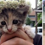 7 Cutest Things Ever to Roam the Face of the Earth