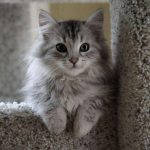 11 Cutest Pussy Breeds You Definitely Want to Take Home