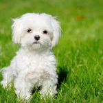 You'll Want to Take Home These 7 Hypoallergenic Dog Breeds