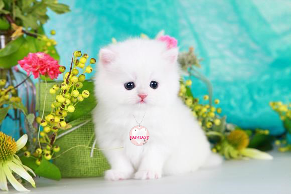 7 Cutest Cat Names That Are Also Unique – Page 7 – Cutestist