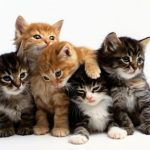 7 Cutest Cat Names That Are Also Unique