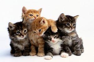7 Cutest Cat Names That Are Also Unique – Cutestist